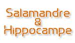 Salamandre et Hippocampe