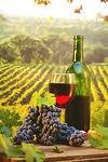 Les Z'Accabailles 2 - Cave à vins, caviste, Lège Cap-Ferret, Arés, Bassin d'Arcachon, bières vins en vrac, bib.