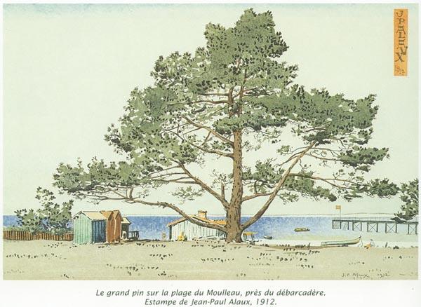 Le pin gigantesque du moulleau - Les pins du moulleau ...